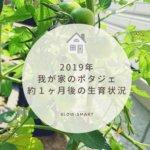【家庭菜園】トマトやオクラの1ヶ月後の成長具合と毎日のお手入れ